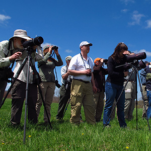 Out There With the Birds: The Bird Watcher's Digest Blog