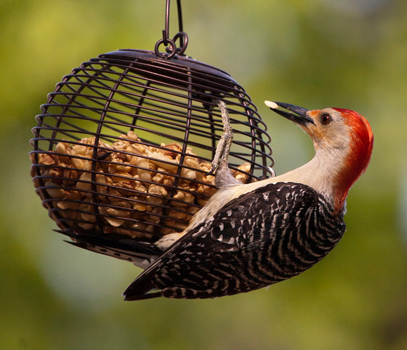 Looking for advice on better bird feeding? We have it!