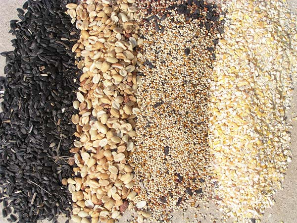 Are you offering the right bird food and seed to your backyard visitors?