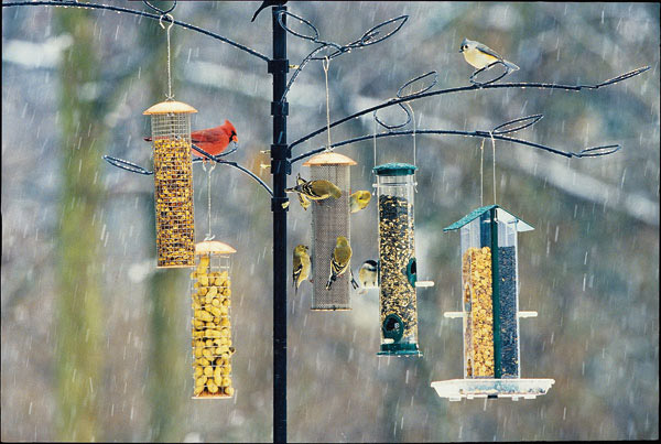 Offer a variety of foods at your backyard feeding station, and you'll see a varitey of birds!