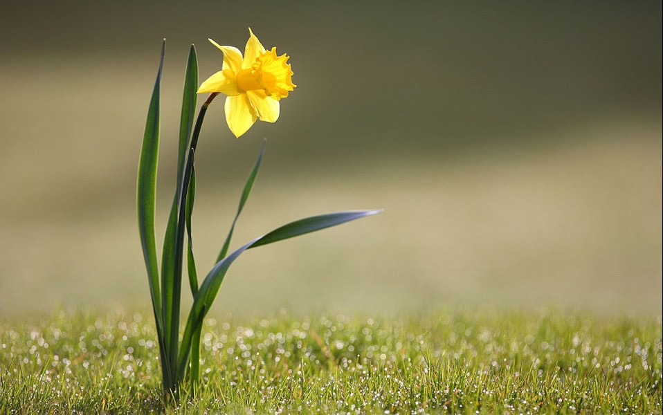Signs of spring aren't limited to daffodils blooming.