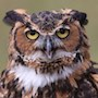 Bird Identification Guide: Owls