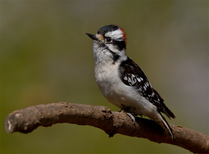 Let's learn some woodpecker facts!