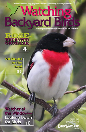 Watching Backyard Birds April 2016