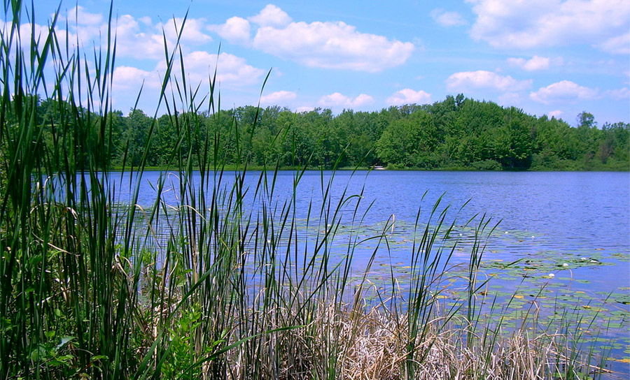 Benton Lake in Manistee National Forest, near the town of Baldwin, Michigan. Photo by NickW2 / Wikimedia.