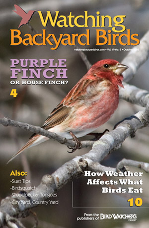 Watching Backyard Birds October 2016
