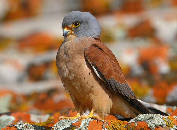 Portugal: Birding an Ancient Land
