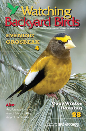 Watching Backyard Birds December 2016