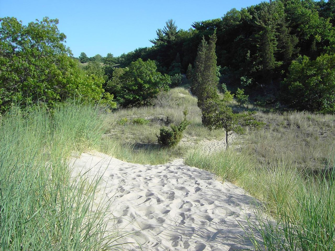 Indiana Dunes State Park in Chesterton, IN. Photo by Lori McCallister / Wikimedia.