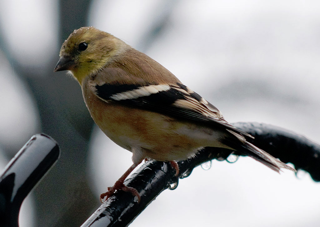 Top 10 Things to Watch For in the Backyard in Autumn » - Top 10 Foods For Winter Bird Feeding » Bird Watcher's Digest