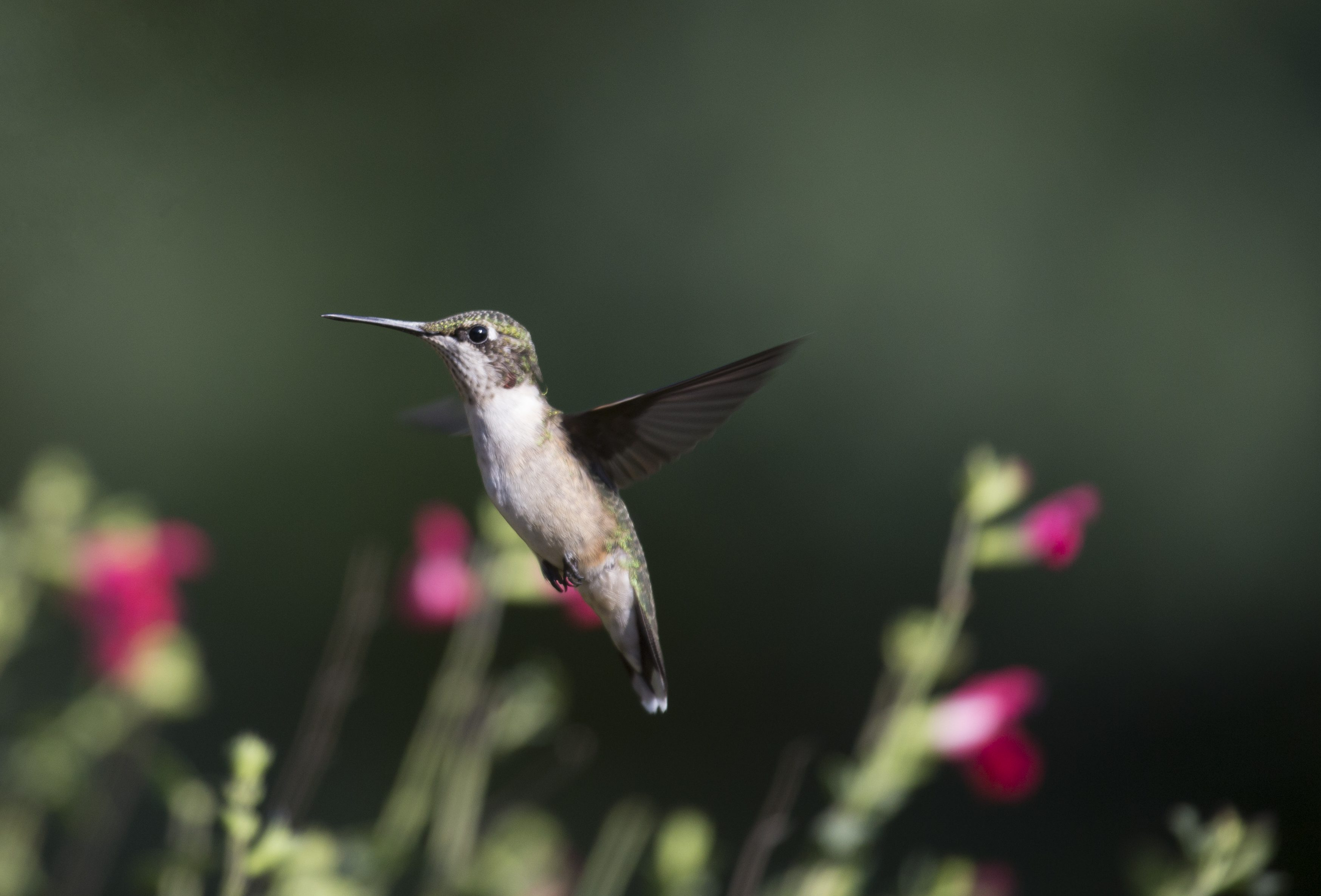 The Flight of a Hummingbird by Connie Etter