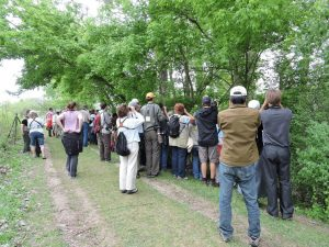 A crowd of birders descends upon Magee Marsh. Photo by Dawn Hewitt.