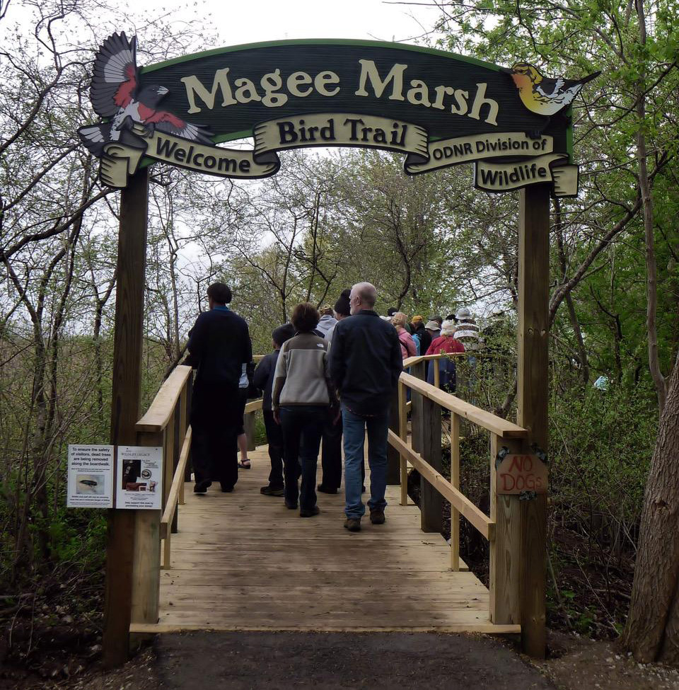 Magee Marsh Boardwalk. Photo by Dave Lewis.