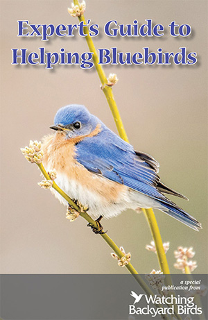 Expert Guide to Helping Bluebirds