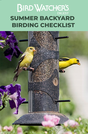 Summer Backyard Birding Checklist