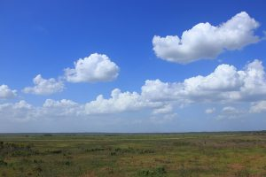 Paynes Prairie Preserve SP observation tower view. Photo by Muon via Wikimedia Commons