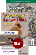 LIMITED-TIME OFFER: Suet Dough Magnet with BWD/WBB Combo!