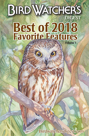 Best of BWD 2018: Favorite Features