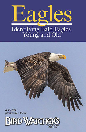 Identifying Bald Eagles, Young and Old