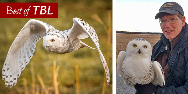 Best of <em>This Birding Life</em>: Snowy Owl Invasion with Scott Weidensaul