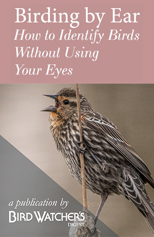 Birding by Ear: How to Identify Birds Without Using Your Eyes