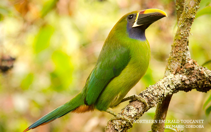 Reader Rendezvous: Go Birding with Us in Costa Rica!—Costa Rica | January 7–14, 2020