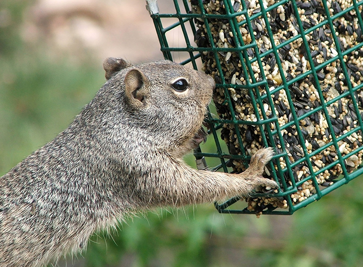 Bird Feeder Problems: A Troubleshooting Guide