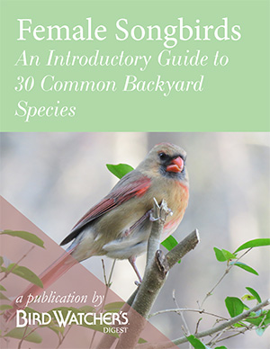 Female Songbirds: An Introductory Guide to 30 Common Species