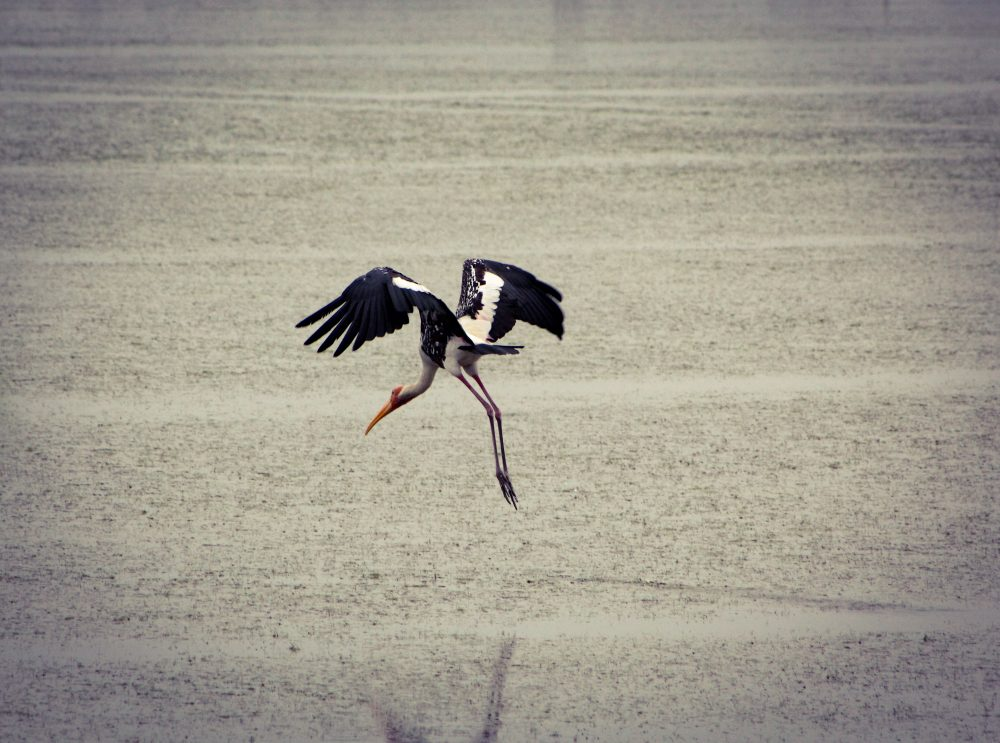 Take off by Karthick