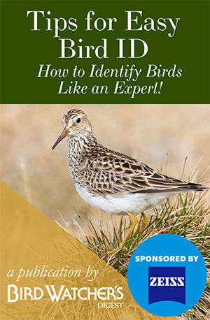 Tips for Easy Bird Identification