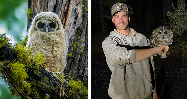 Episode 89: Spotted Owl Conservation with Ryan Wickiser